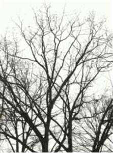 oh-tree
